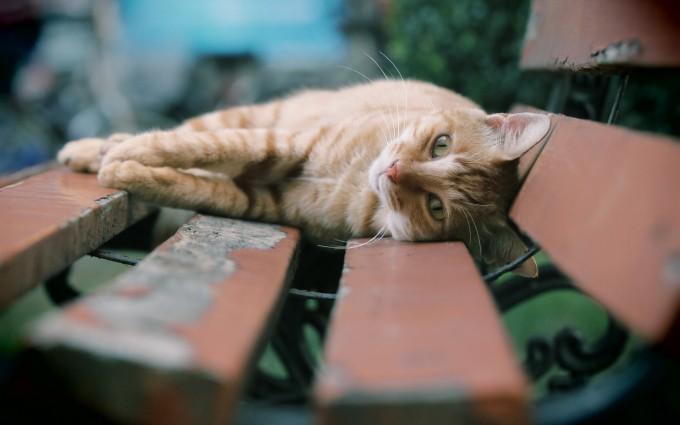 free download cat wallpaper