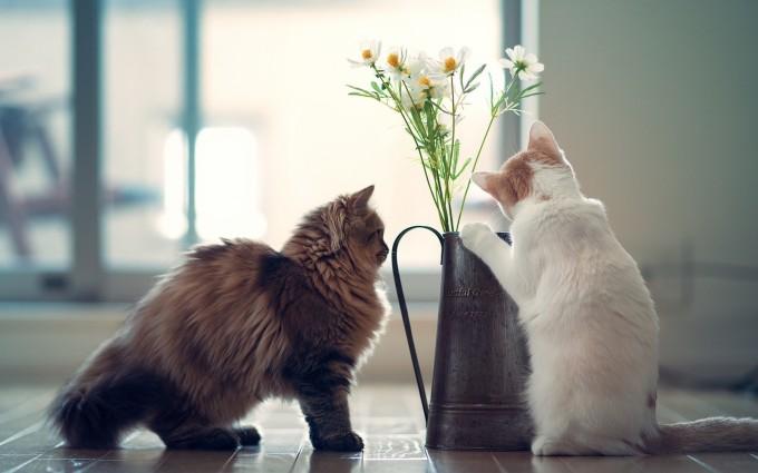 free kitten wallpapers