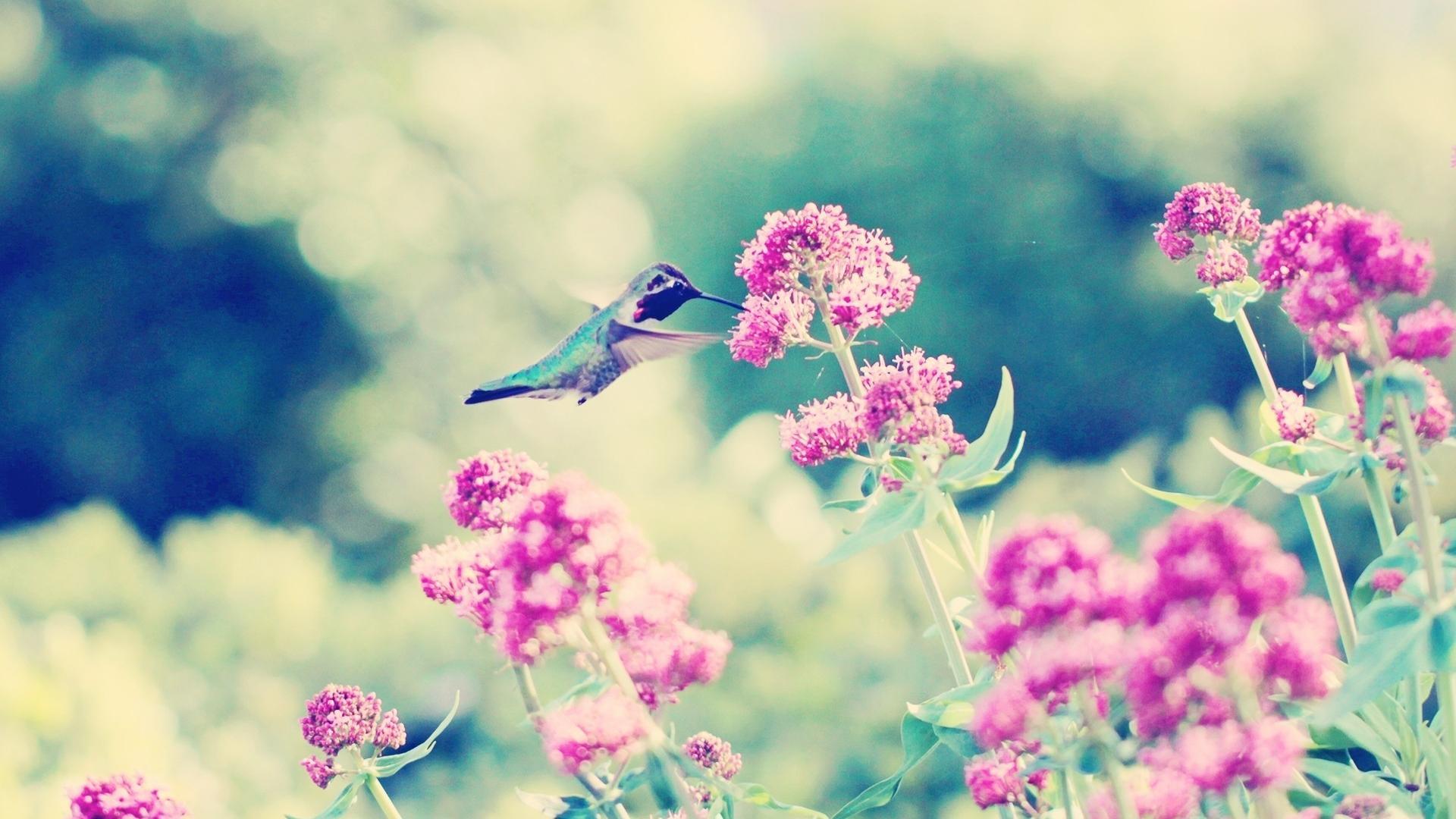 free wallpaper bird hd