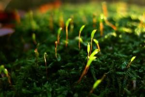 free wallpaper moss