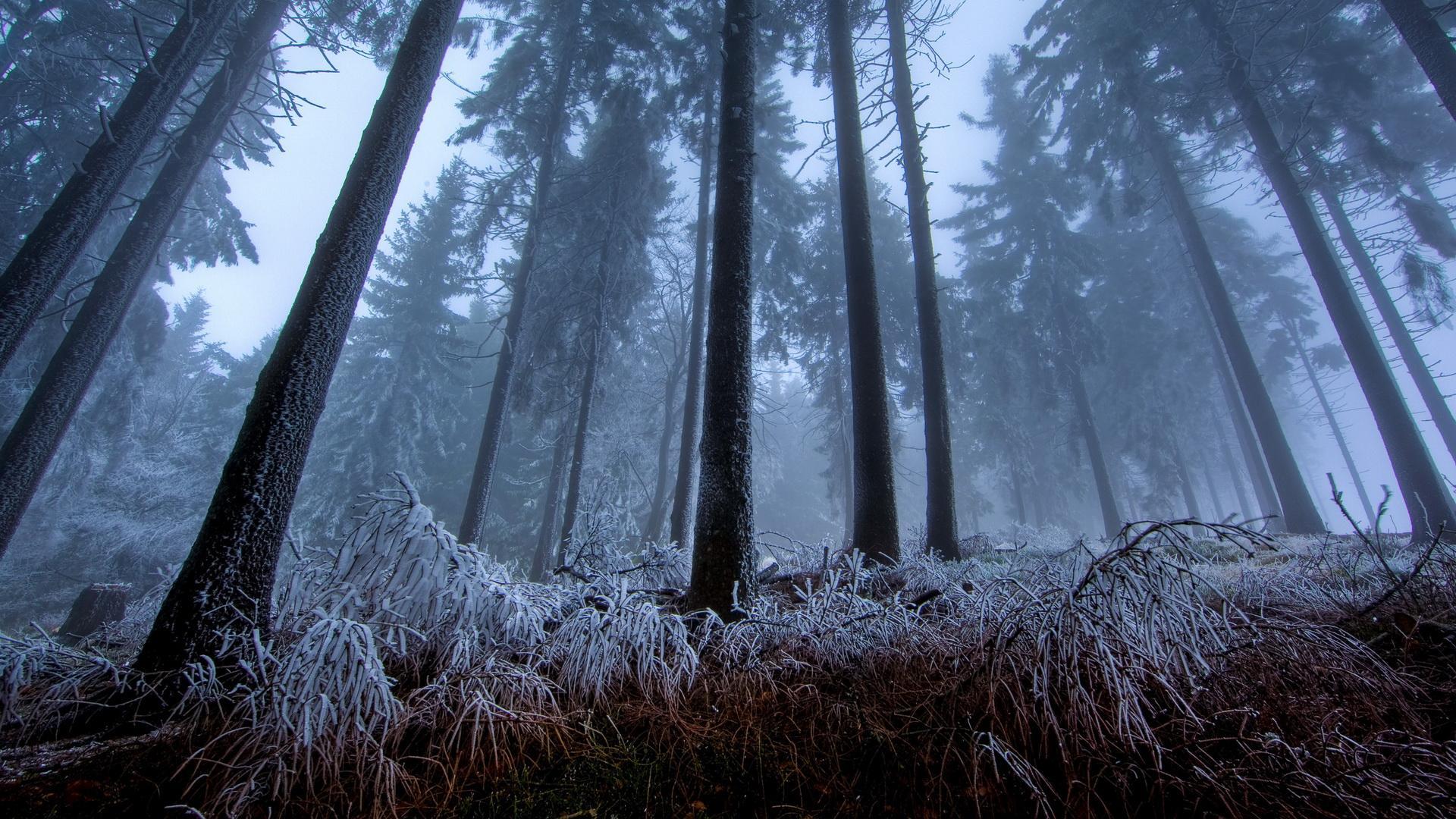frost wallpaper jungle
