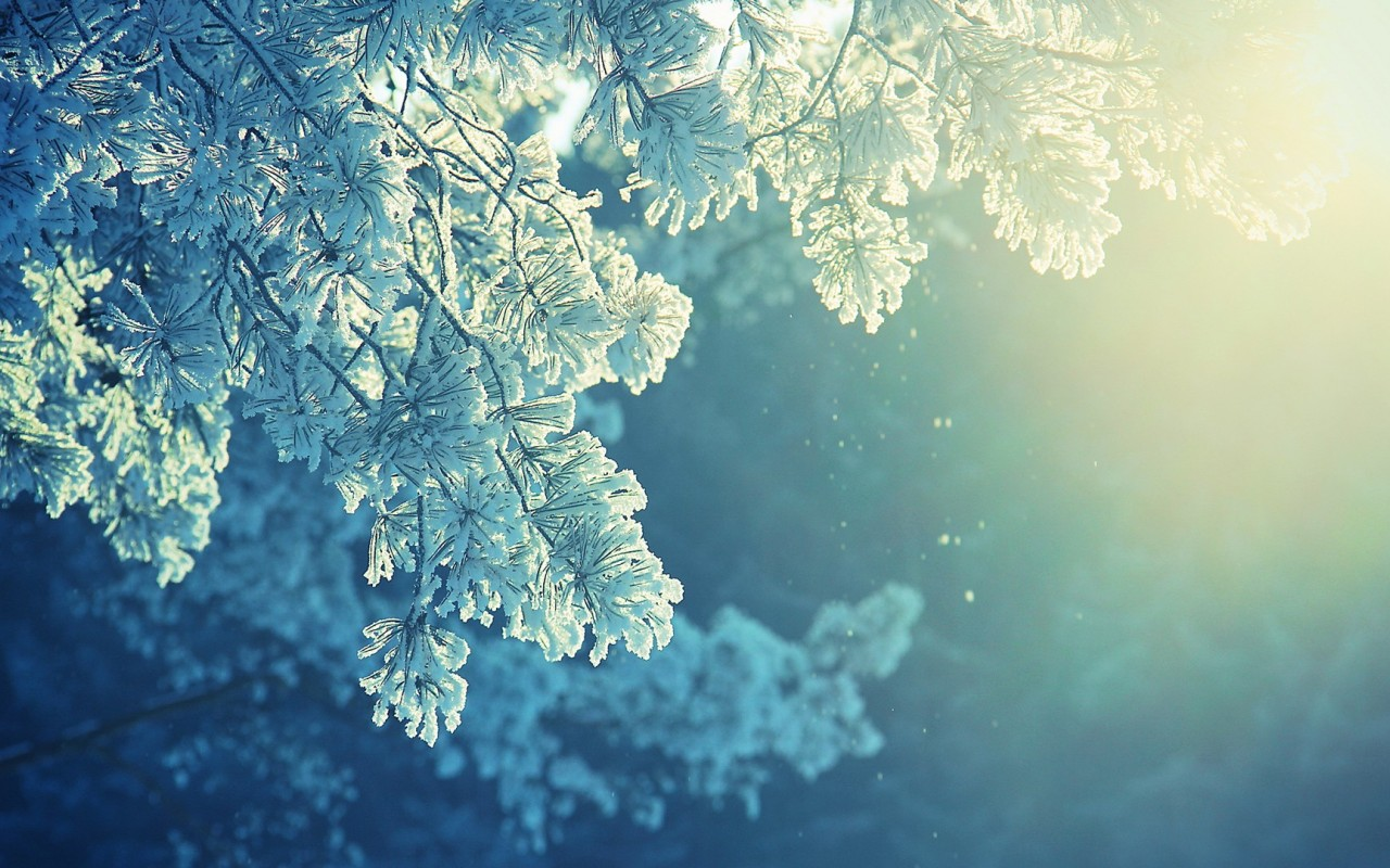 frost wallpaper nature hd
