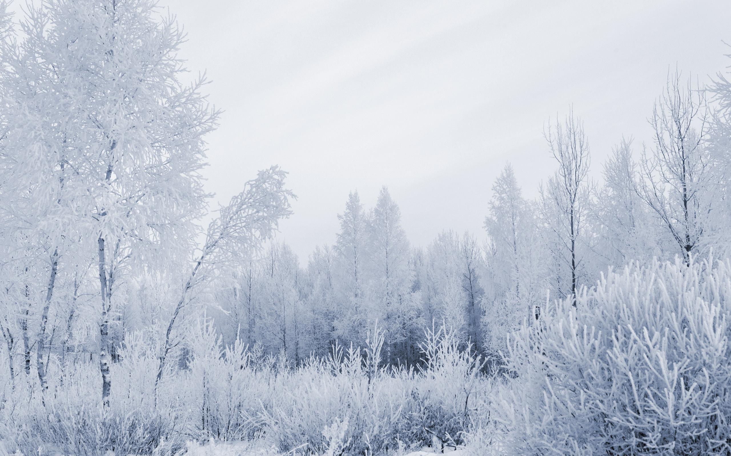 frost wallpaper hd desktop wallpapers 4k hd