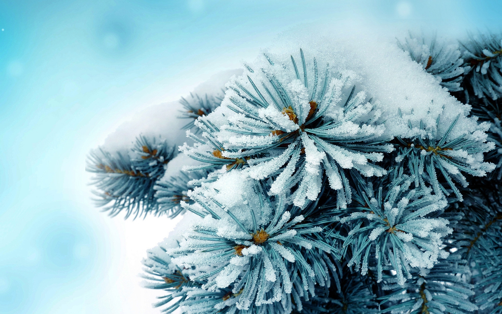 frosty wallpaper alaska