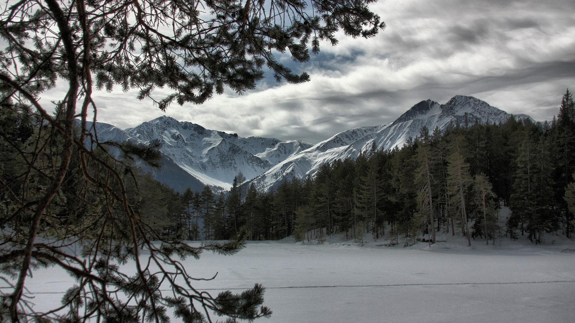 frozen forest backgrounds - HD Desktop Wallpapers | 4k HD