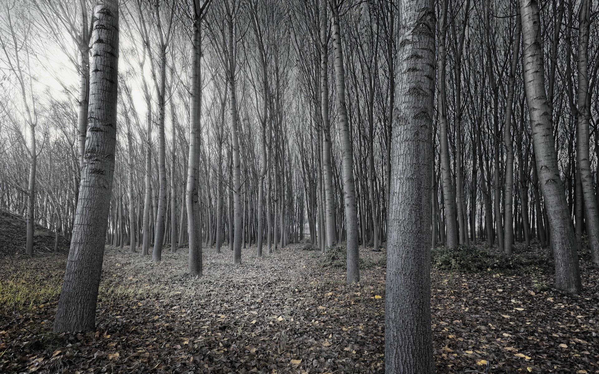 Full Hd Forest Wallpapers Dark Hd Desktop Wallpapers 4k Hd