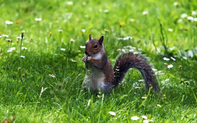 funny cute squirrel pictures