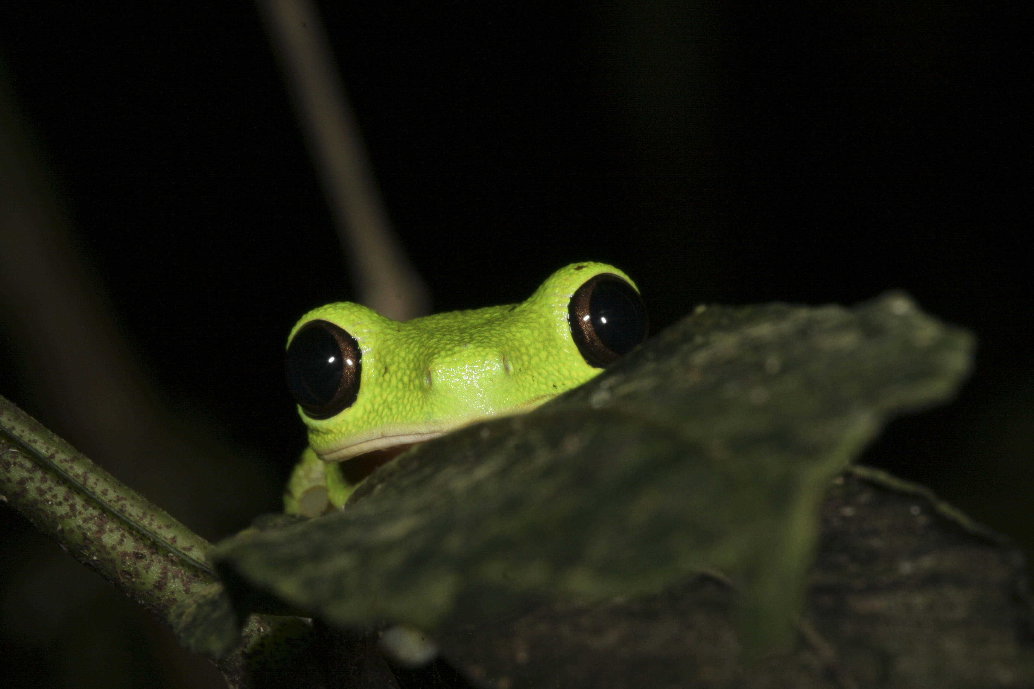 funny frog wallpaper