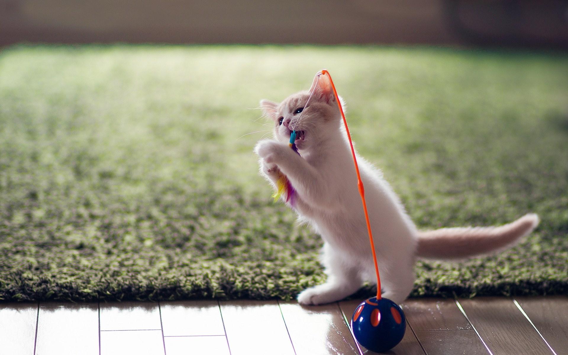 funny kitten wallpaper - HD Desktop Wallpapers | 4k HD