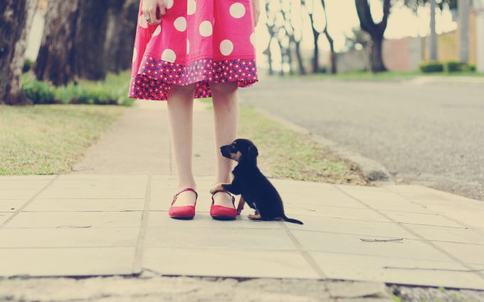 funny puppy wallpapers A5