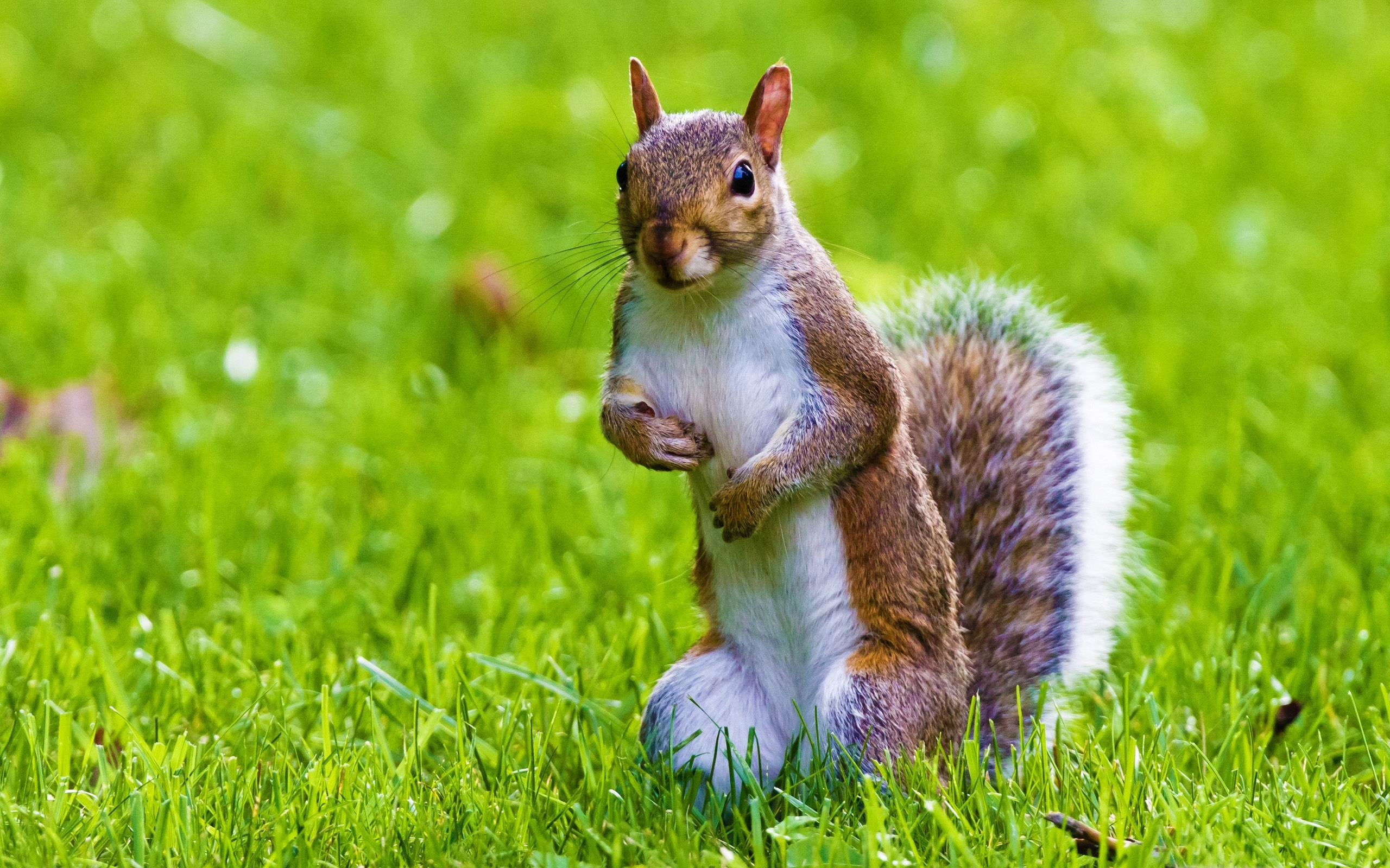 funny squirrel pictures