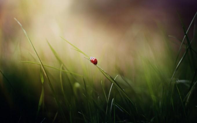 grass images desktop