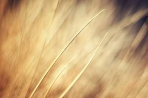 grass photo desktop