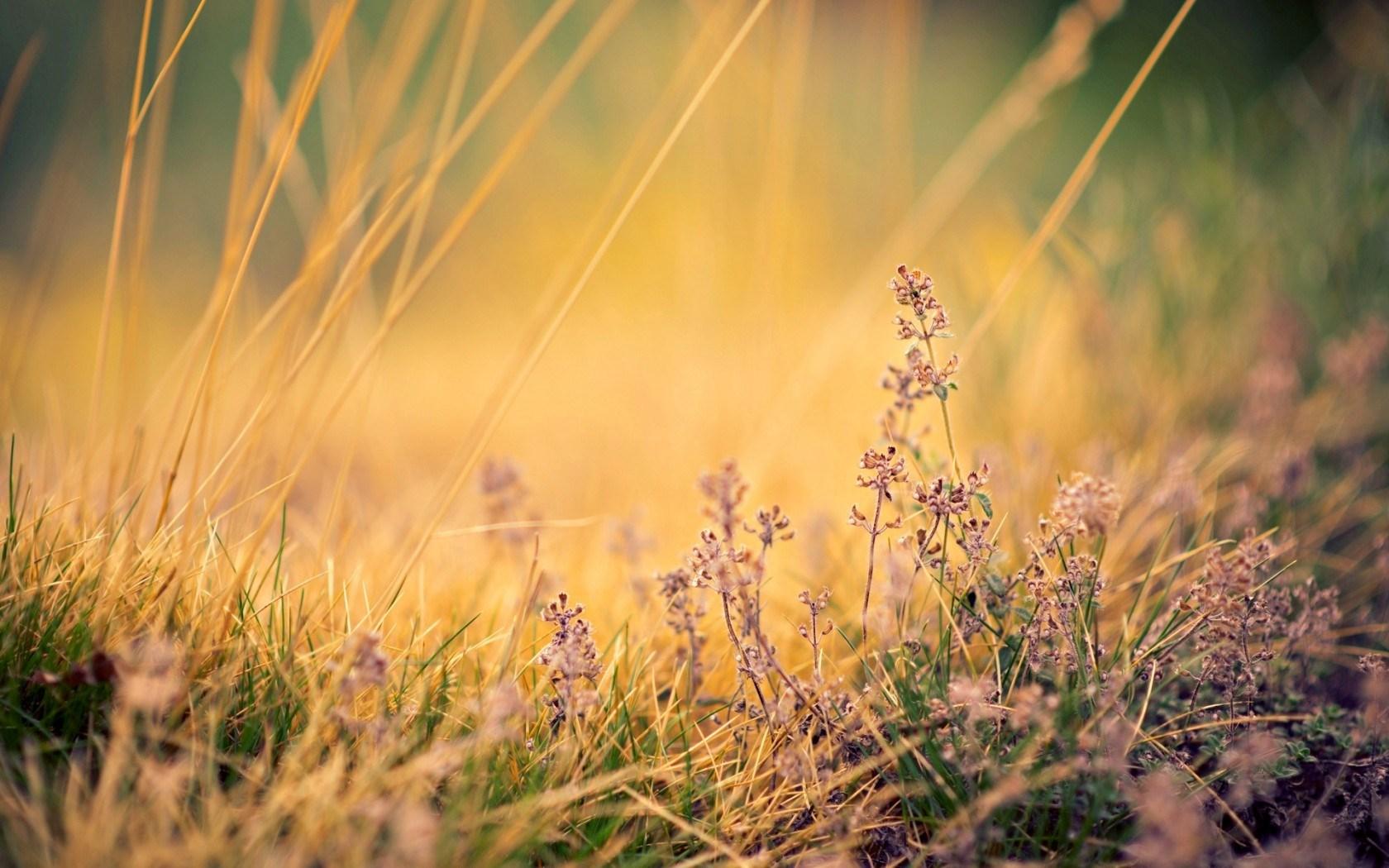 grass photo landscape