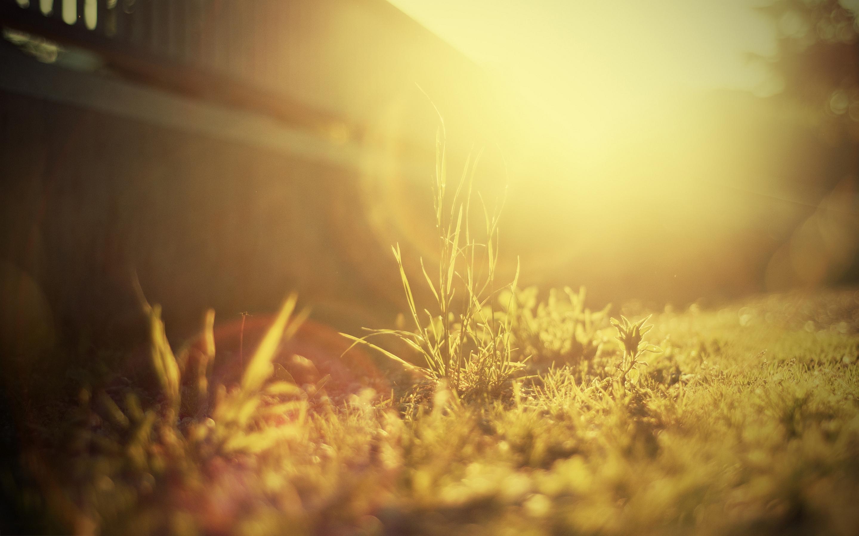 grass photo sunshine