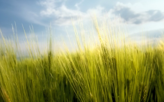 grass pictures download
