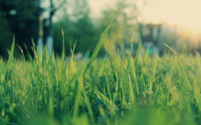 grass pictures field