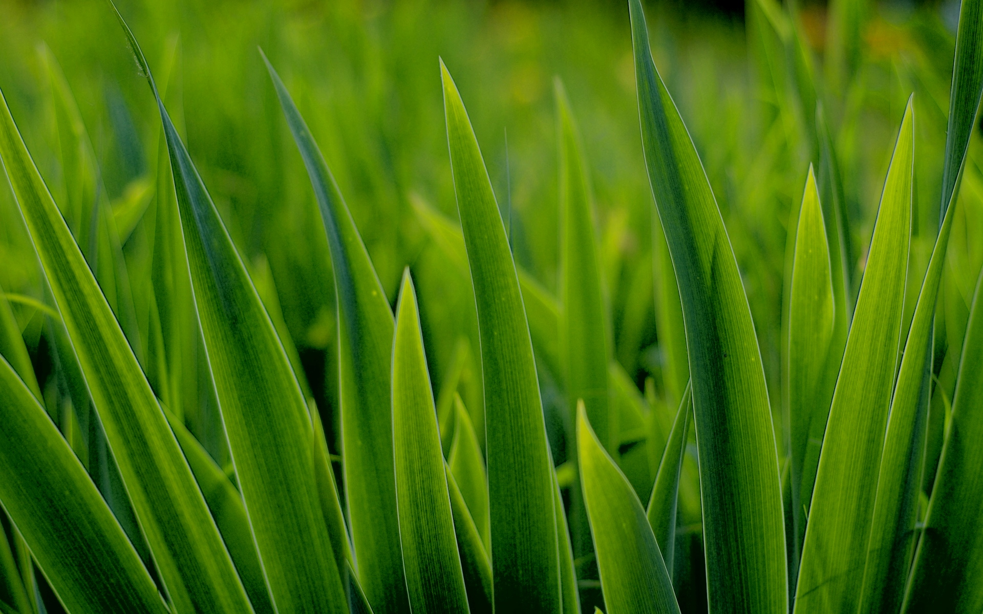 grass pictures flowers