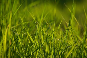 grass pictures hd