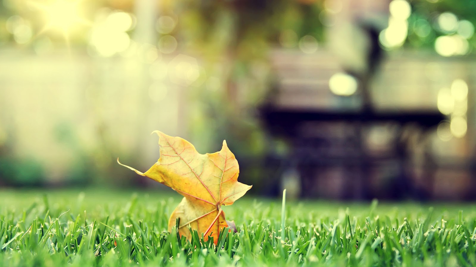 grass pictures nature hd