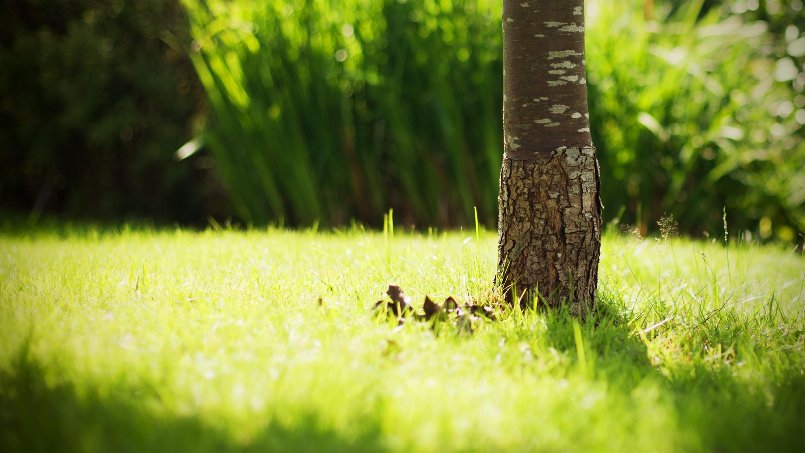 grass pictures tree - HD Desktop Wallpapers | 4k HD
