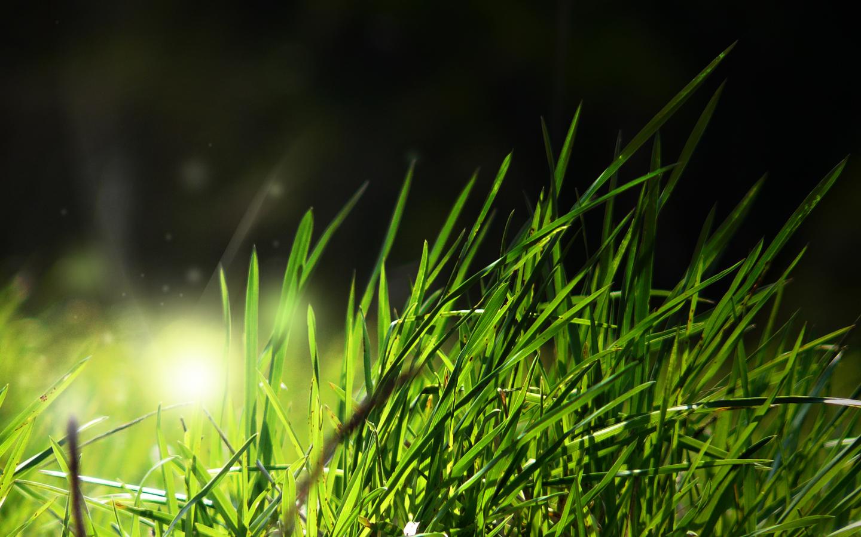 grass pictures unique