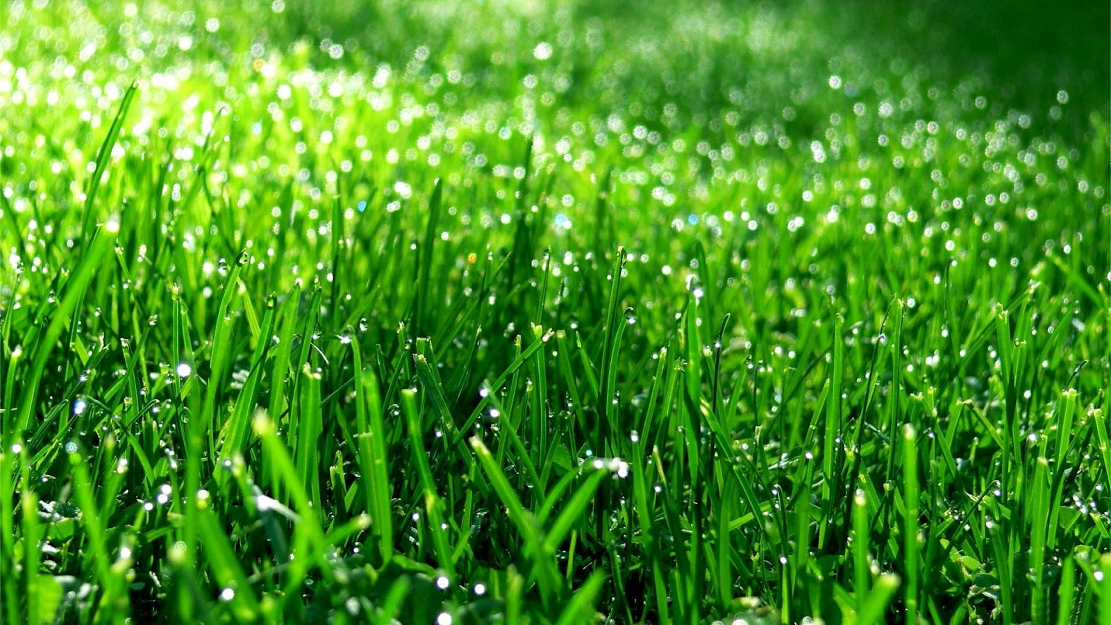 Grass Wallpapers Hd Archives  Page 2 Of 8 HD Desktop