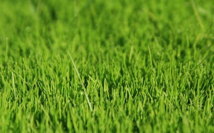 grass wallpaper close up