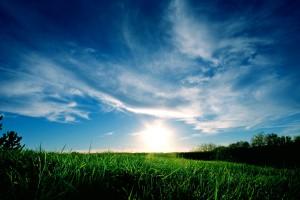 grass wallpaper download