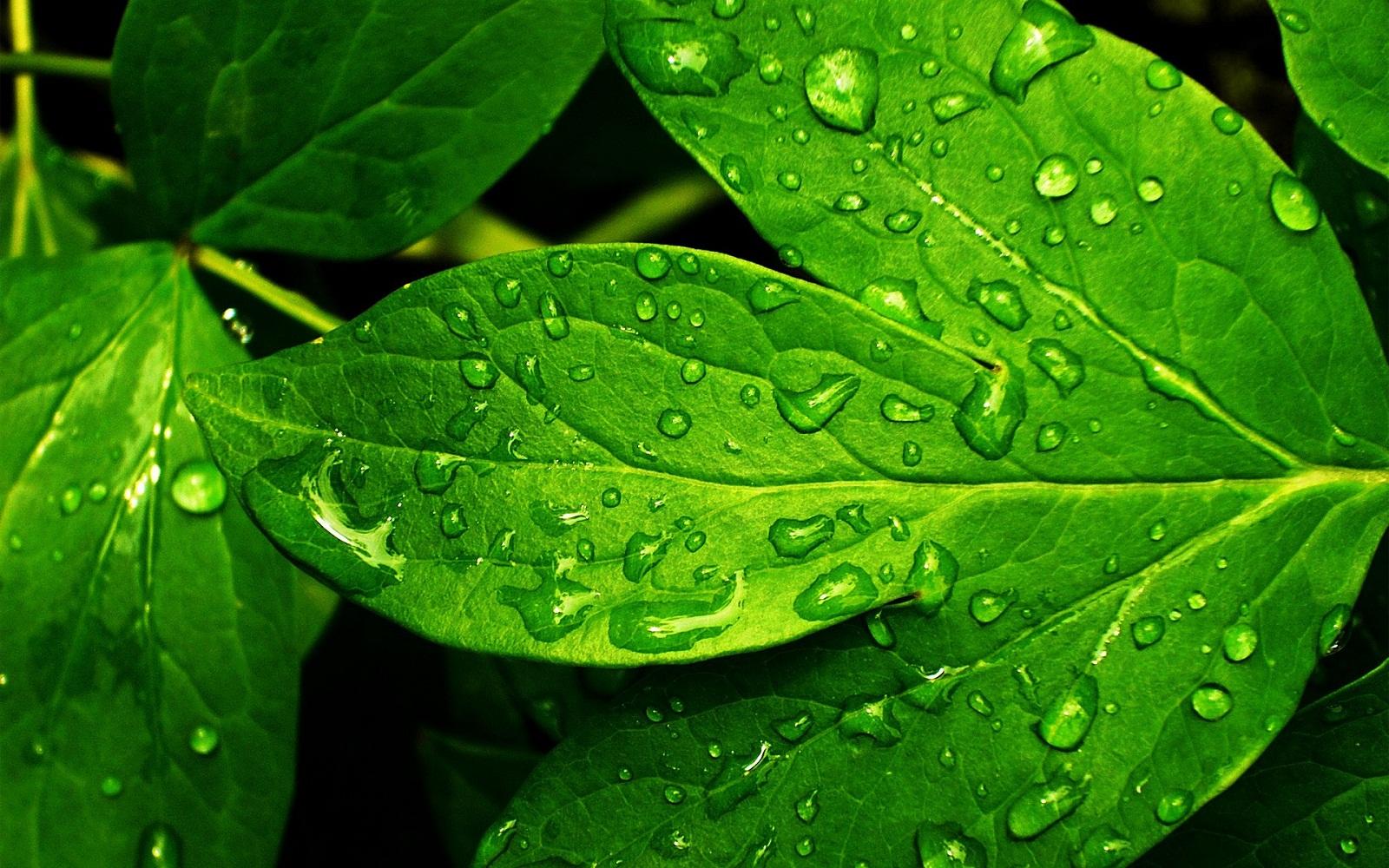 grass wallpaper green