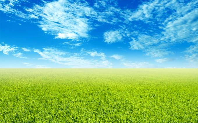 grass wallpaper nature hd