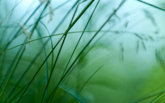 grass wallpaper simple