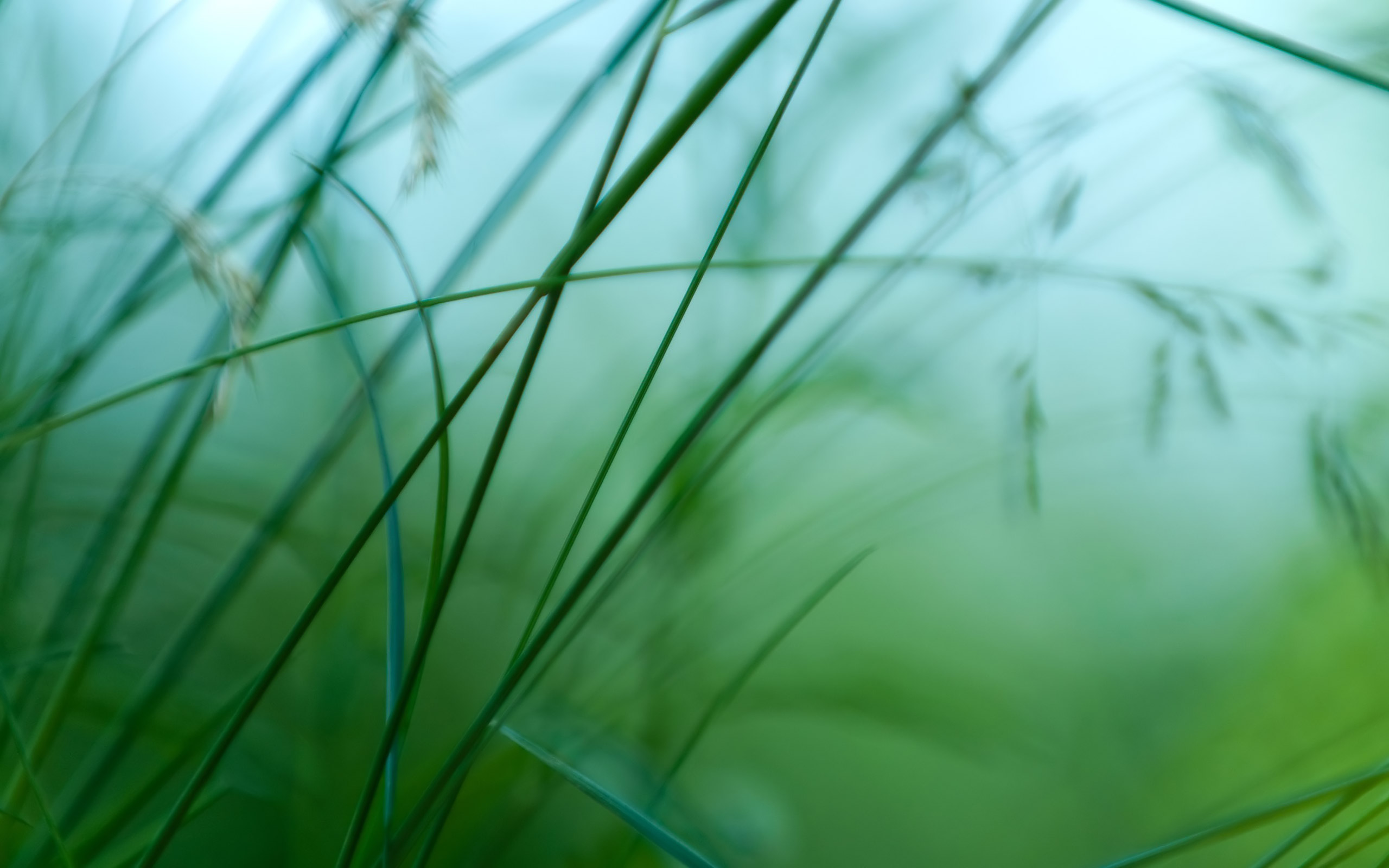 grass wallpaper simple