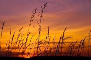 grass wallpaper sunset hd