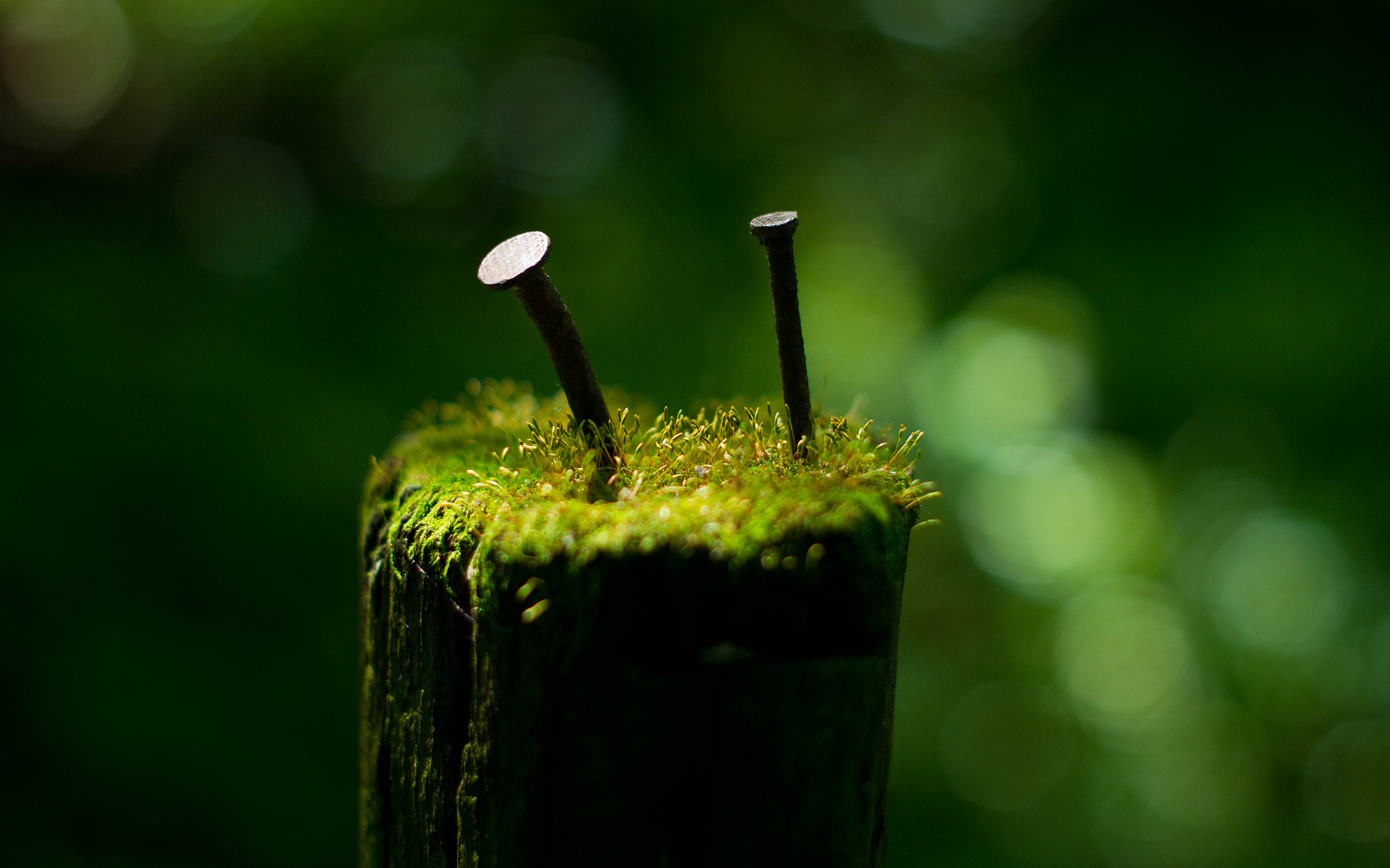 green abstract images