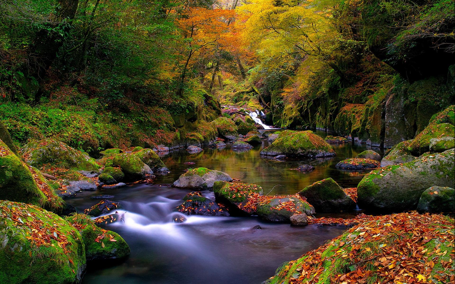 green forest hd wallpaper stream