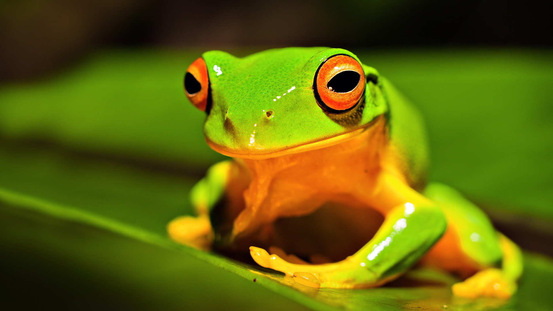 green frog background