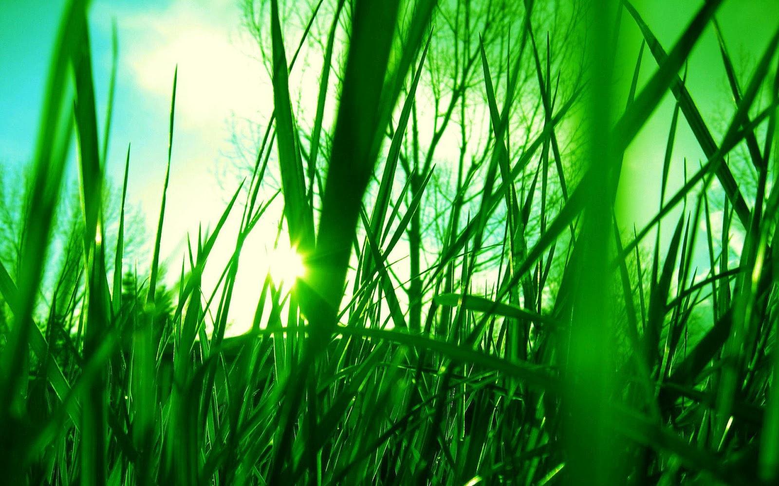 green bird - HD Desktop Wallpapers | 4k HD