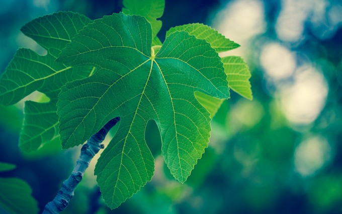 green images download