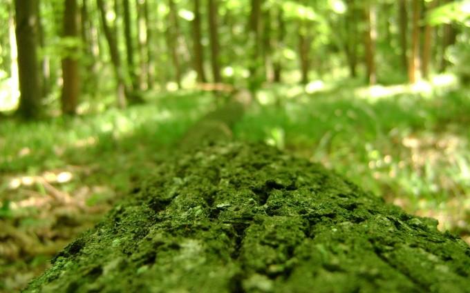 green macro images