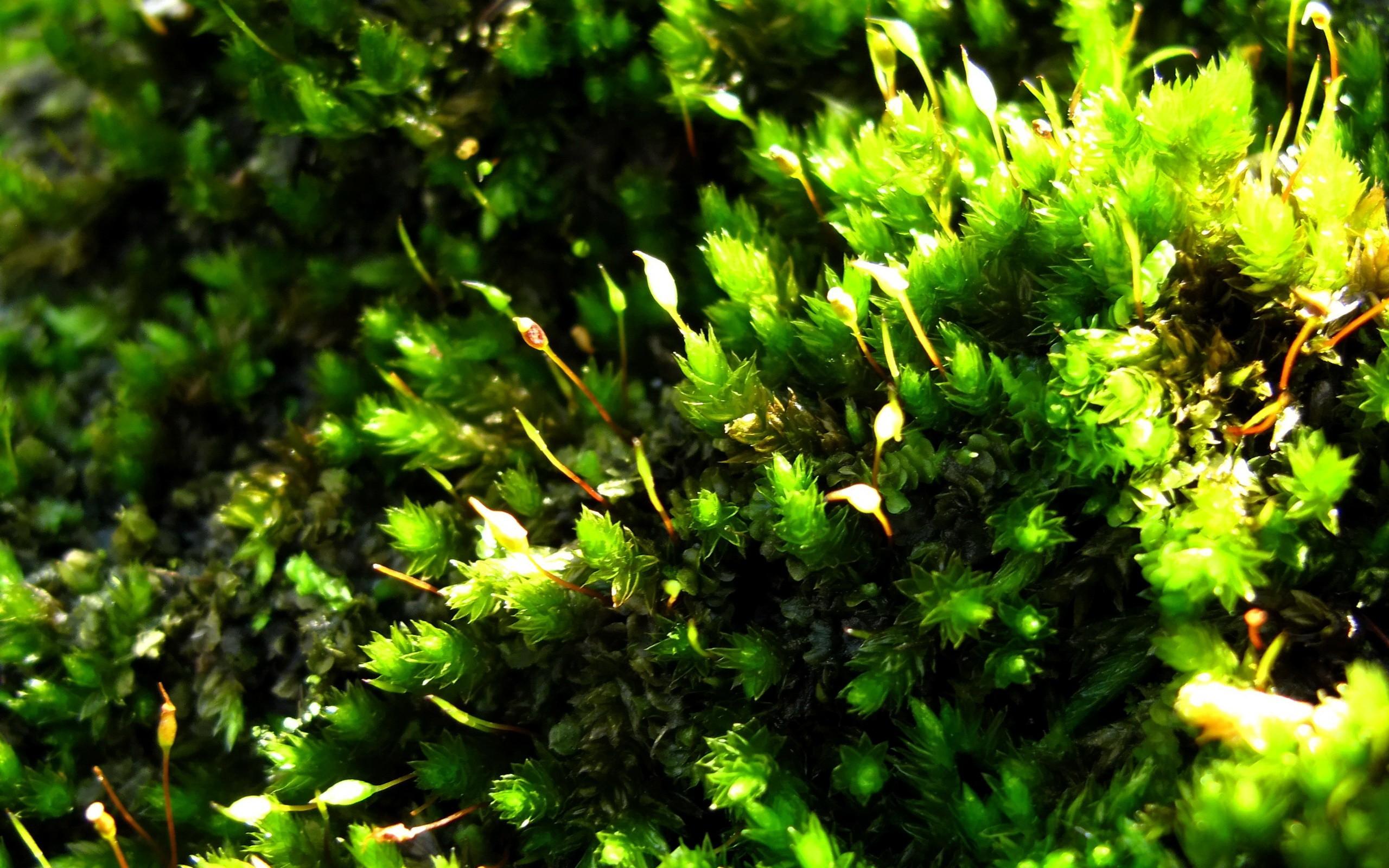 green grass hd - HD Desktop Wallpapers   4k HD