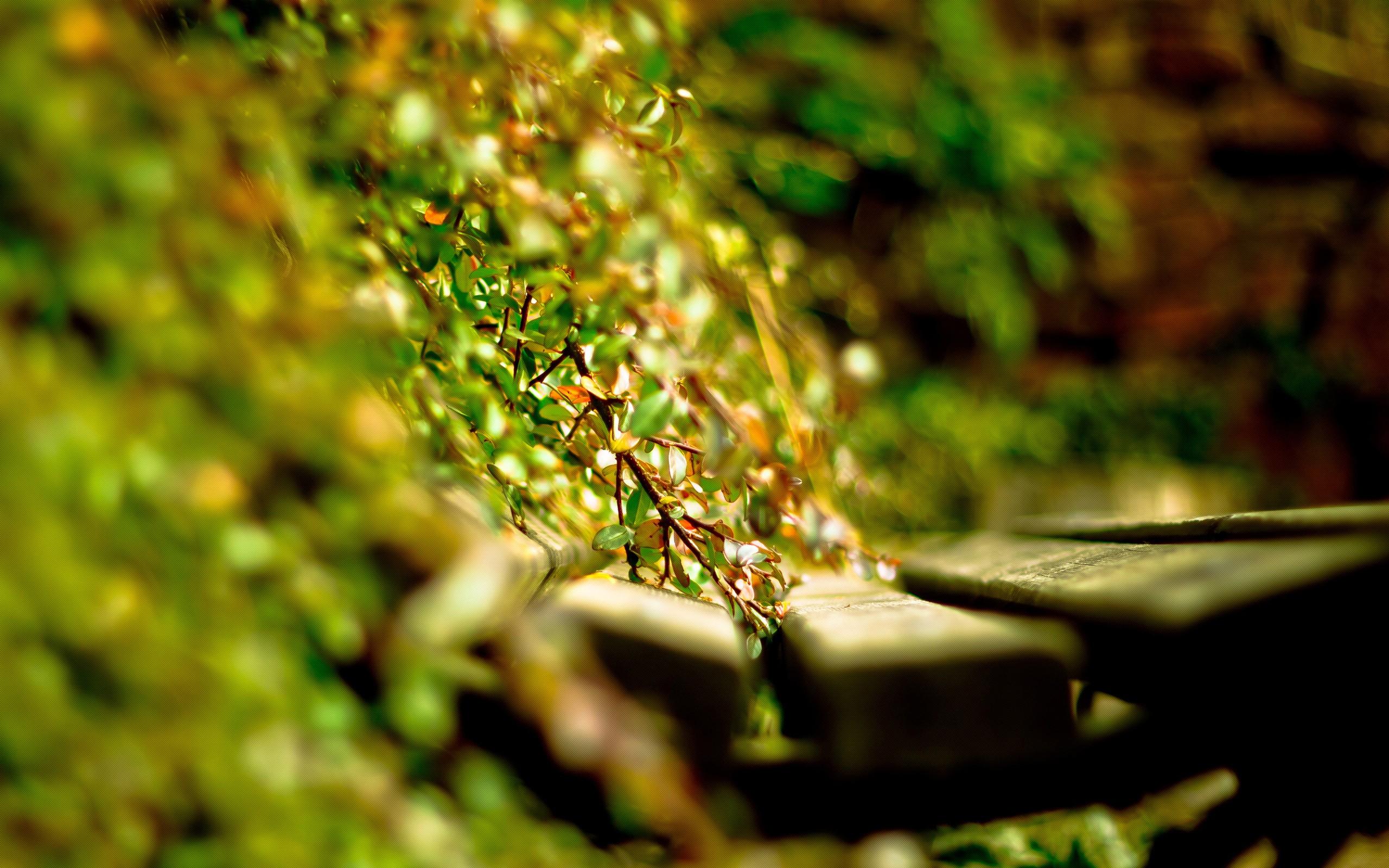 green nature lovely