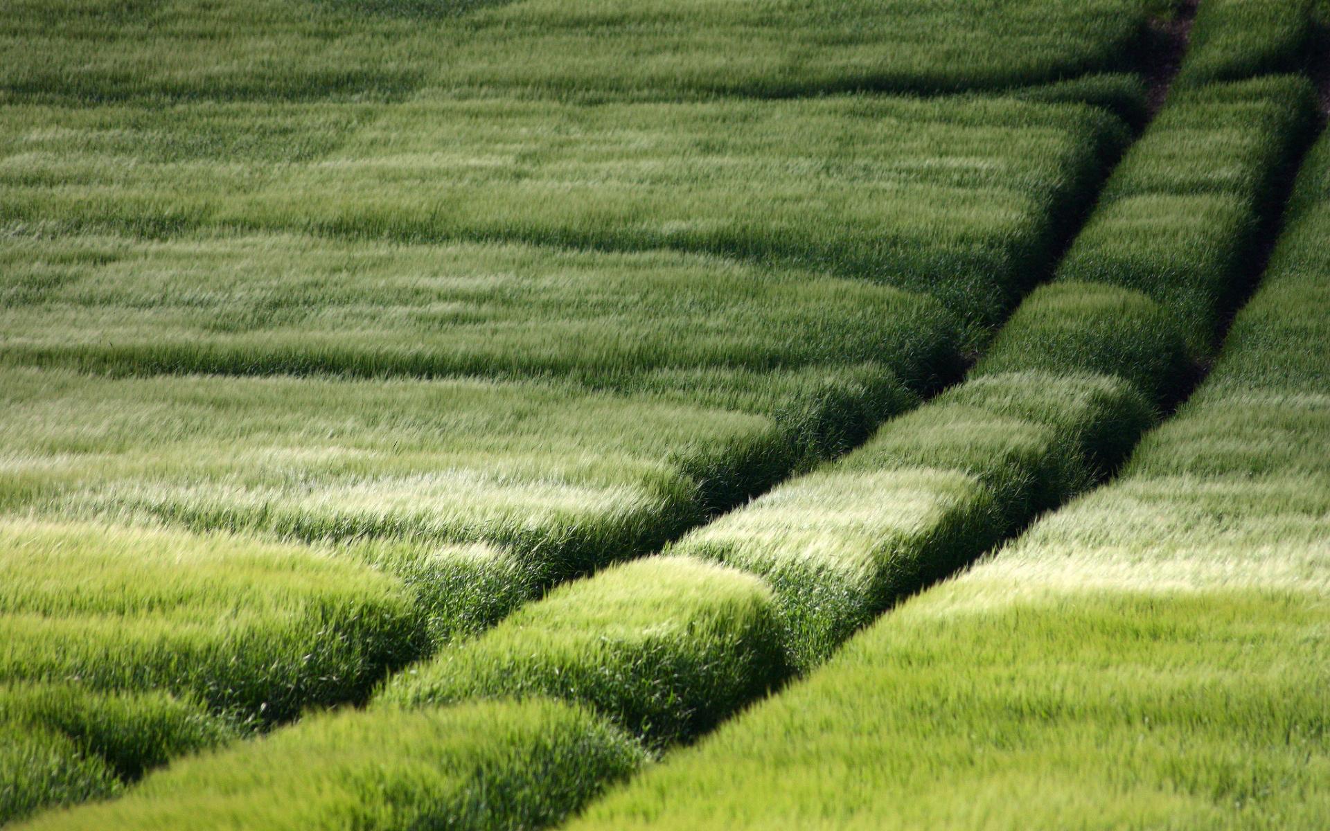 green summer fields