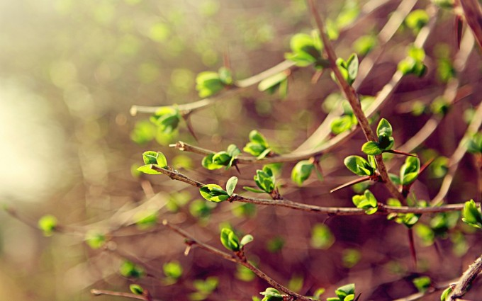 green twigs nature