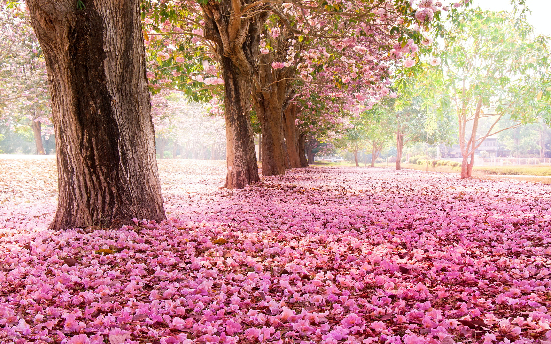 ground wallpaper pink leaves