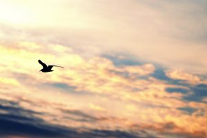 gull wallpapers