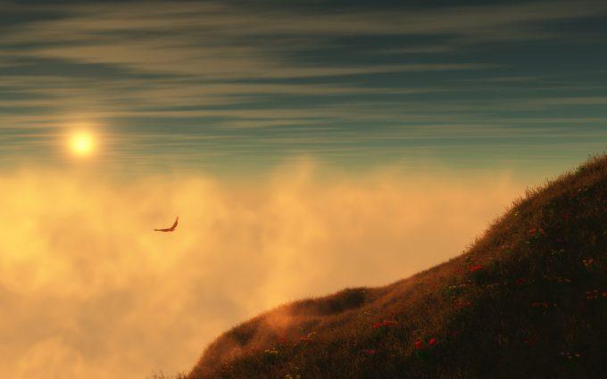hawk wallpaper sunset