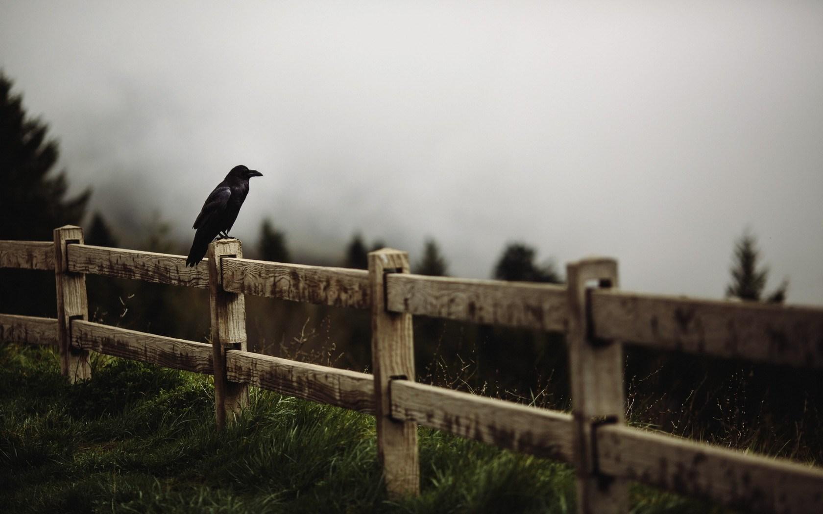 hd birds photos