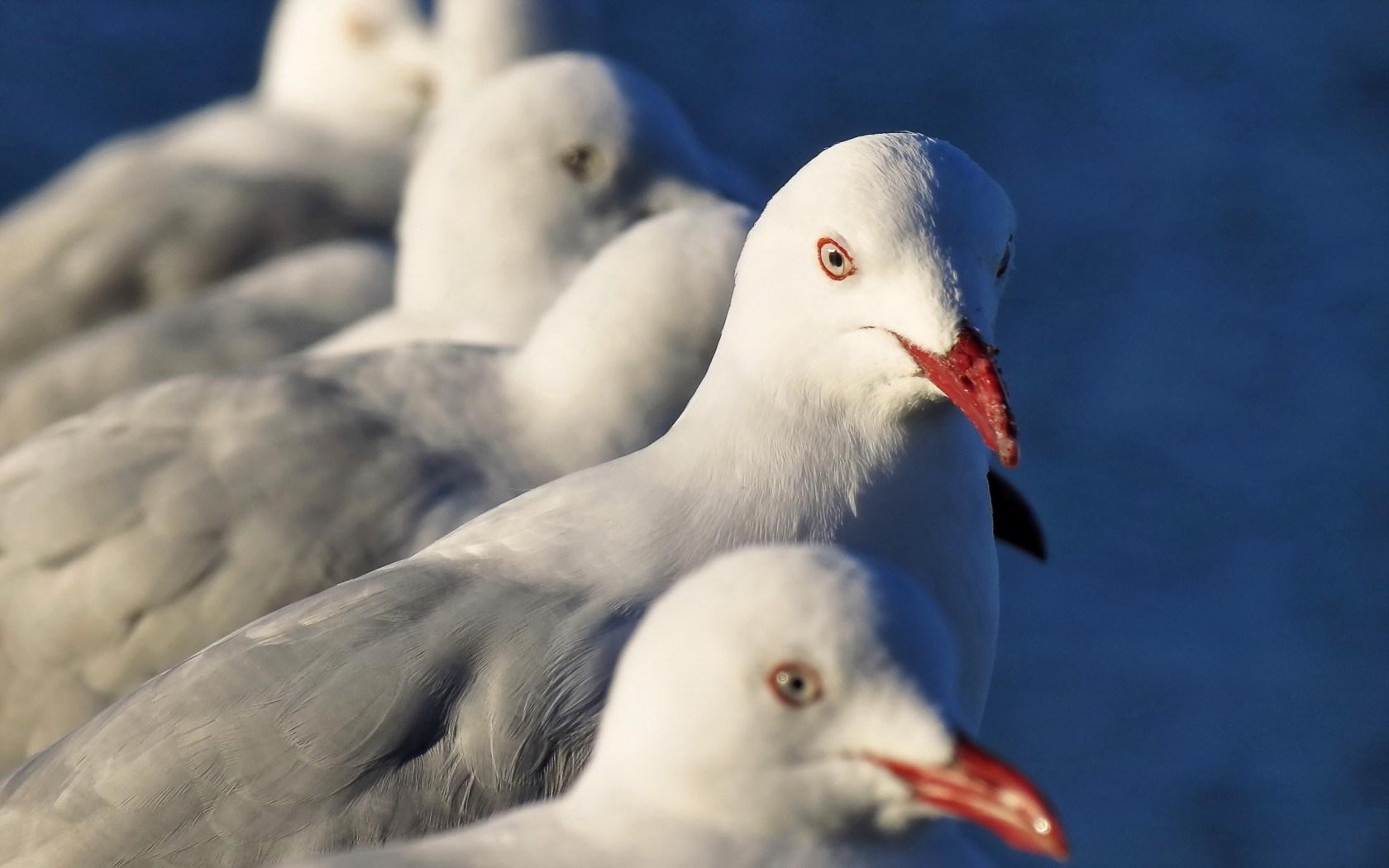 hd birds wallpapers