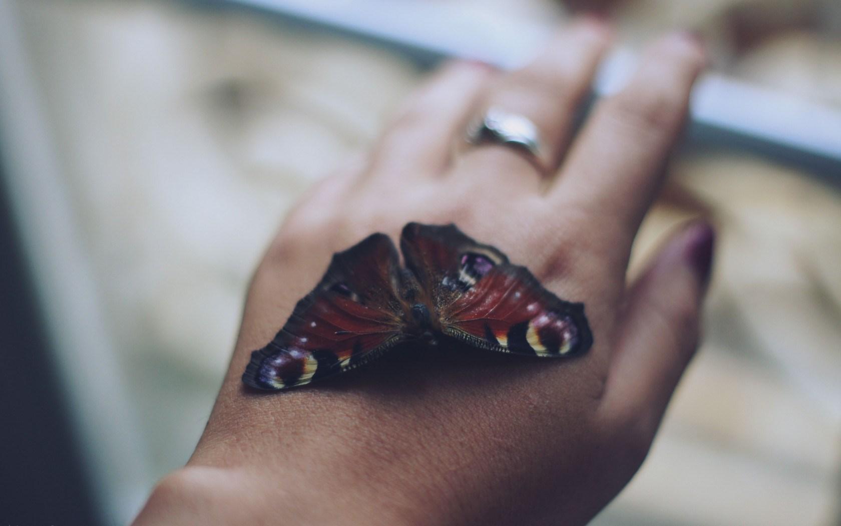 hd butterflies